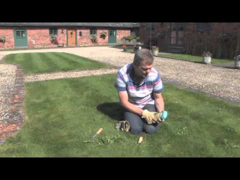 How To Get Rid Of Weeds In The Lawn Video Roundup Weed