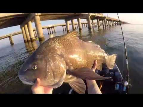 Hunting Virginia Trophy Fish With The 2020 Predator PDL