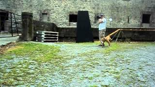 American Pet Trainer
