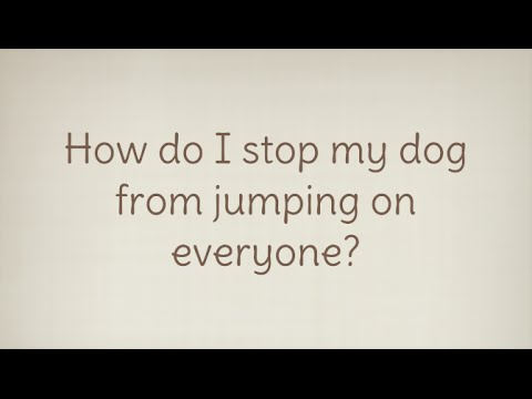 Ask A Dog Trainer: How do I stop my dog from jumping on everyone?
