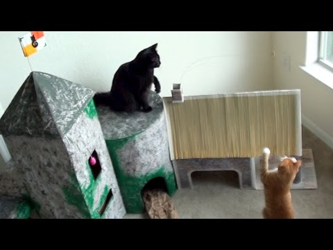 EPIC Cat Castle!