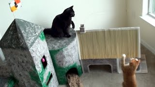 Ultimate Cat Castle!