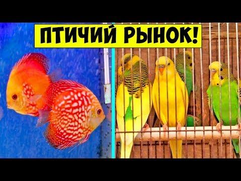 ОДЕССА Староконный рынок / РЫНОК ЖИВОТНЫХ Птичий Рынок Рыбки / Продажа собак и кошек