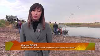 Kazakhstan Зарыбление 2017