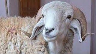 """رئيس نقابة """"الجزارين"""": لابد من حل أزمة اللحوم قبل عيد الأضحي"""