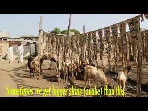 KOFAR WAMBAI TANNERY