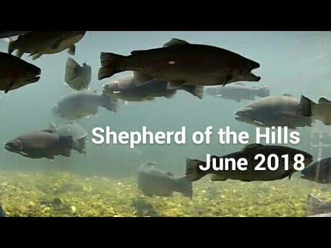 Shepherd Of The Hills June 2018 / Fish Hatchery Missouri