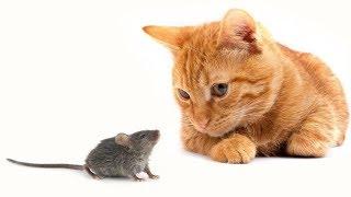 Коты и мышки: Том и Джерри в реальной жизни | ОЧЕНЬ СМЕШНОЕ ВИДЕО ПРО КОШЕК И МЫШЕК
