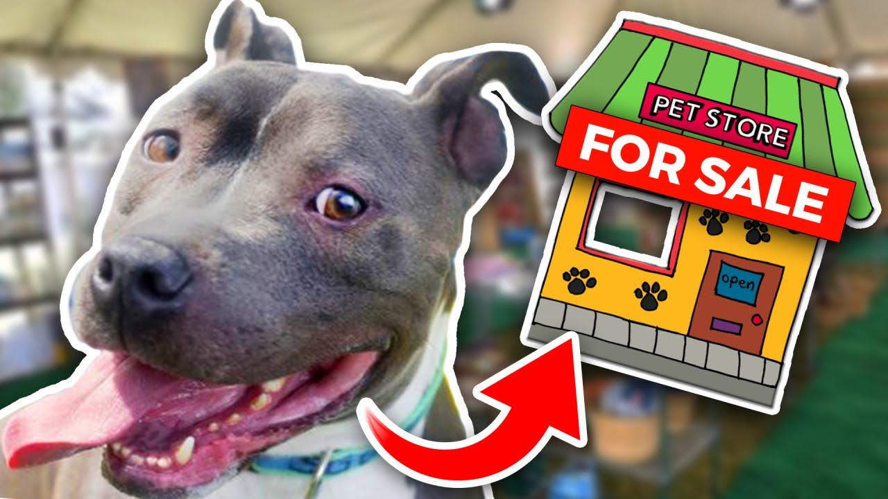 Homeless Dog an ENTIRE Pet Store