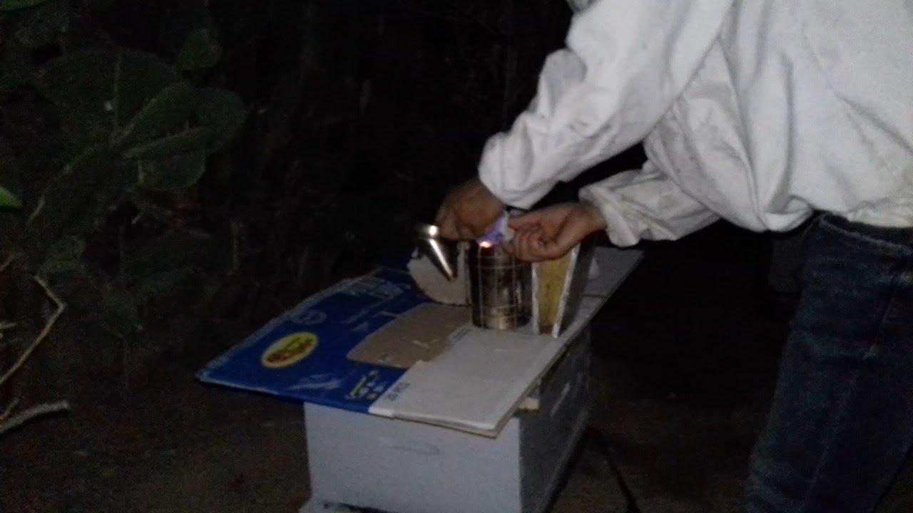 فحص خلية نحل ليلا للمبتدئين/فحص النحل ليلا