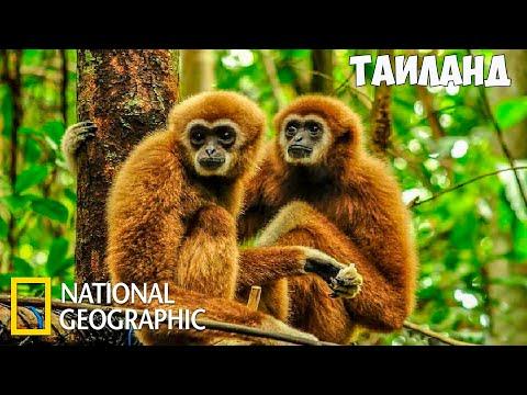 Дикая природа Таиланда (Часть 2 из 2)   Документальный фильм про животных   (National Geographic)