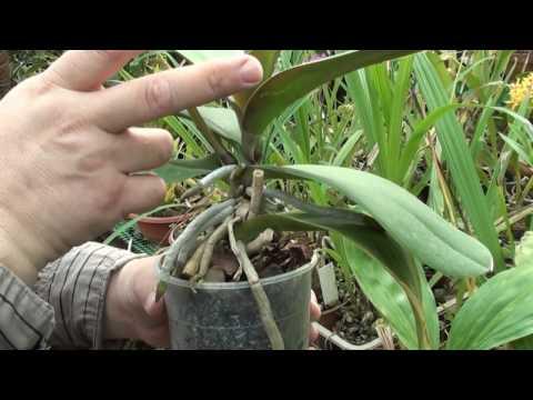 Орхидея (Коктебель, Крым) - Официальный сайт