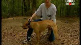فلم وثائقي عن كلاب البيتبول