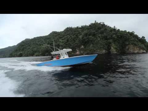 Calypso Marine 37