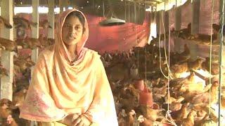 সোনালী মুরগীর খামার করে ৩ কোটি টাকার জমি কিনেছেন গাজীপুরের নাসিমা   Nasima's sonali poultry farm