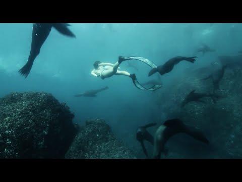Kimi Werner: Robinson Crusoe Island Sea Lions