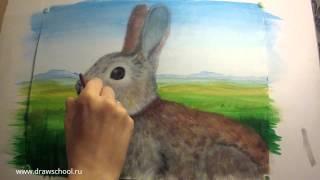 Как нарисовать кролика, зайца красками(В этом уроке мы разберём как нарисовать кролика или зайца красками. Полное пошаговое описание процесса..., 2016-03-09T07:03:23.000Z)