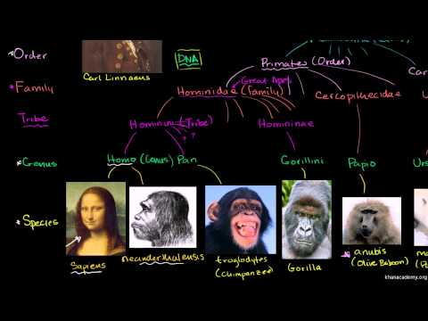 Biology - Tree of Life - 01 Taxonomy and The Tree of Life