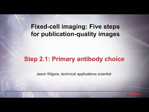 2.1 Primary Antibody Choice–Fixed Cell Imaging: 5 Steps For Publication-quality Images