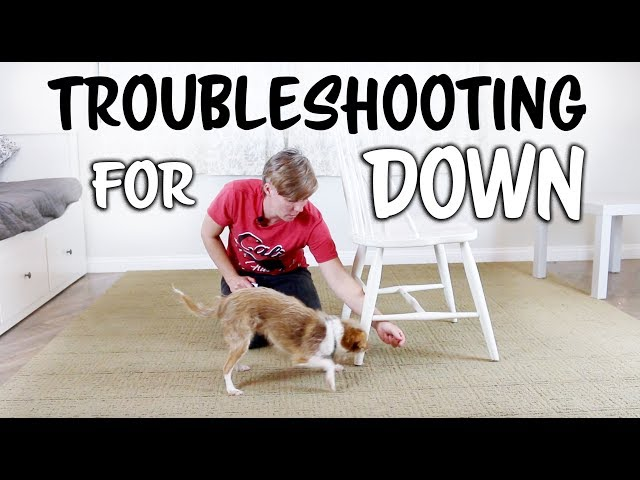 Teach your dog to down - Troubleshooting