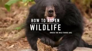 How to Aspen: Wildlife Encounters