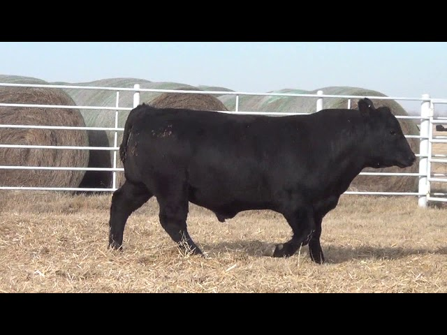 Express Ranches Lot 195