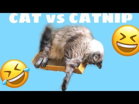 cat-vs-catnip