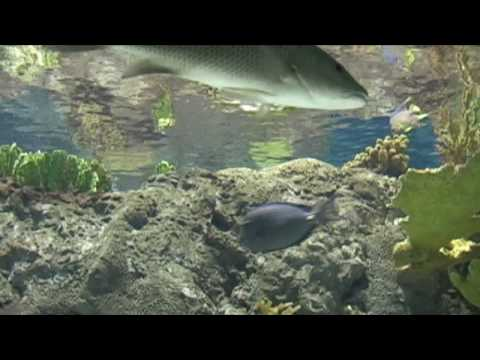 Relaxing Music Therapy - Relaxing music aquarium