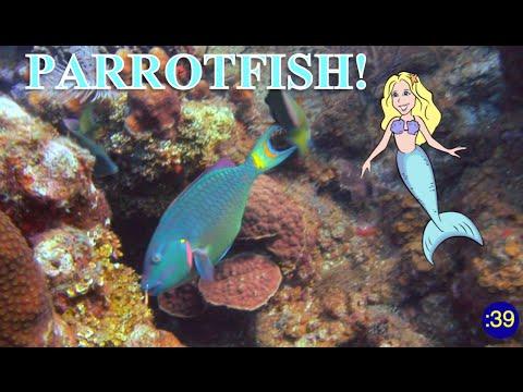 MERMAID MINUTE #16: PARROTFISH With Mermaid Linden - For Kids - Meet A Real Mermaid!