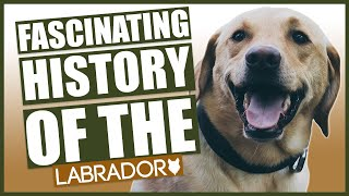 The History Of The LABRADOR