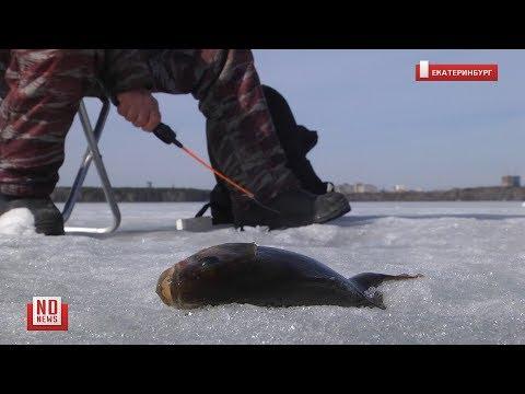 Рыбакам все нипочем: ни весенний лед, ни коронавирус