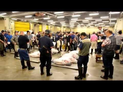 Tsukiji fish market auction with bonus features