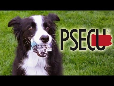PSECU Visa Commercial with Nana the Border Collie