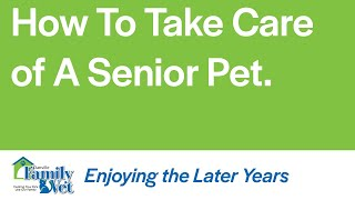 How to take care of a senior pet with dr katie rohrig