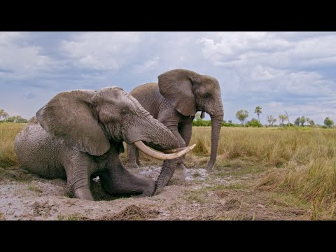 Giving an Elephant in Need a Much-Needed Leg Up