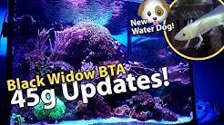 Black Widow BTA? Axolotls! Reef Jar! (45g - 5/12/2018)