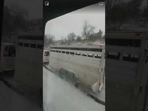 Eric Hunter - Camel and Snow Slowed Traffic On an Interstate in PA.