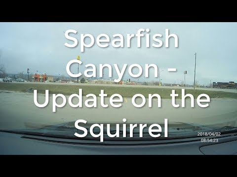 Spearfish Canyon - An Update On The Squirrel