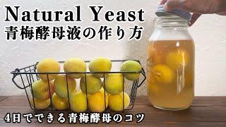 【自家製酵母】青梅酵母液の作り方!4日で出来ちゃい簡単すぎてごめんなさいっ、全過程公開!今が旬の食材でできる!natural yeast、ume、sourdough