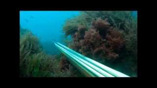 Pesca Submarina en Ceuta