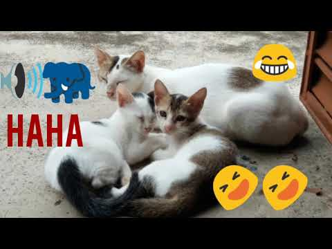 LITTLE HEARTS AFRAID OF ELEPHANT'S ROAR ON TELEVISION/FUNNY CATS VIDEOS