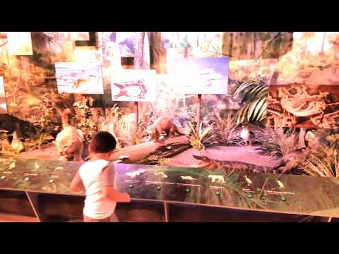 Activities at the South Florida Science Center and Aquarium - Summer 2017