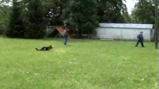 Alfa Dog Team - Dog Training - 2. Part