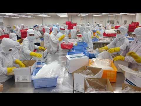 East Bay Seafood Tuna & Swordfish Frozen Production
