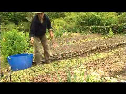 Cultivateur à Roue, Houe Maraîchère, Ou Poussepousse C