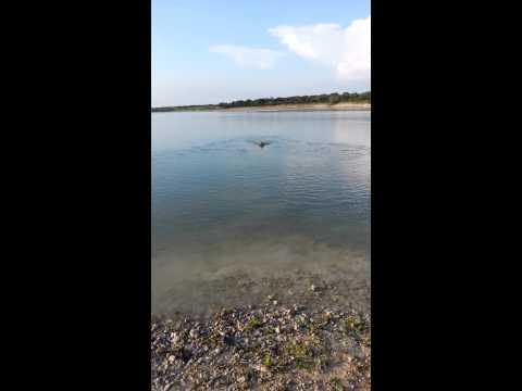 Dallas swimming in the Lake 06132014