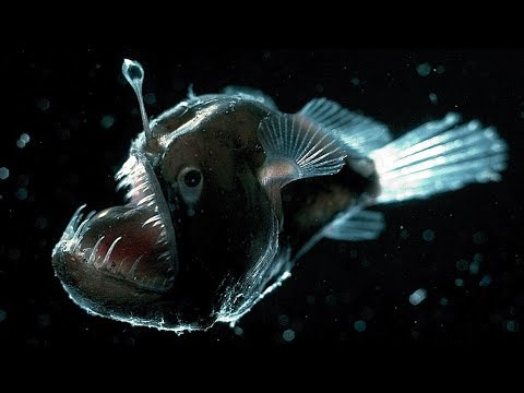 13 Glowing ALIEN Fish From The Deep Sea