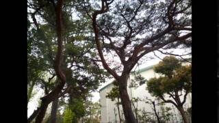 愛知県立豊橋時習館高校をご案内します