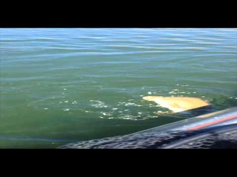 Drop shot fishing lake topaz with atomic custom baits for Topaz lake fishing report