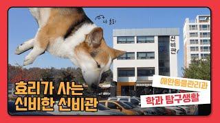 효리가 사는 신비로운 그 곳은, 수성대학교 애완동물관리…